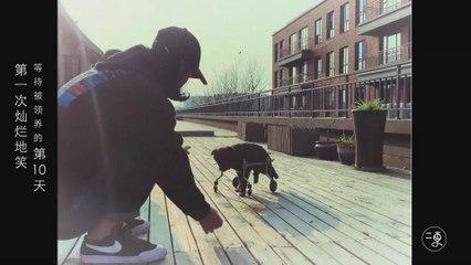 一只狗的等待
