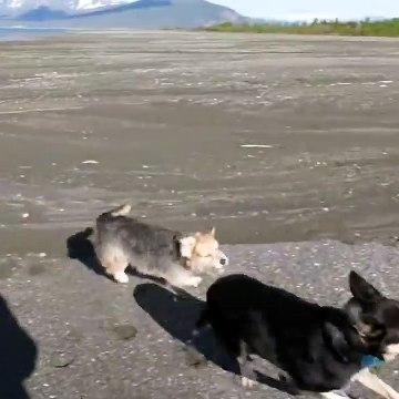 Darby Chasing Shadow on Kluane Lake
