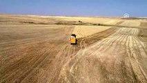 Buğday ve arpa üreticisini sevindirdi
