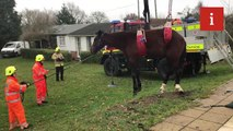 Horse is removed from Kent swimming pool on New Year's day