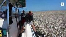 Navegando por una isla de plástico