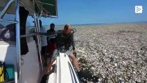 Sailing through a plastic island