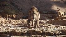 The Lion King: Finde Dein Brullen (German)