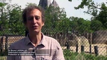 Inspection vétérinaire au Parc zoologique de Paris