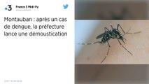 Tarn-et-Garonne : Un cas de dengue diagnostiqué à Montauban, une opération de démoustication lancée