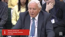 David Attenborough details most drastic effects of climate change