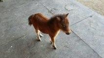 Quoi de plus adorable que ce mini cheval