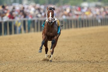 Bodexpress, Race Horse Steals the Show by Running without a Jockey
