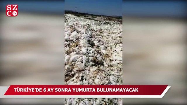 Türkiye'de 6 ay sonra yumurta bulunamayacak
