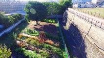 Parisculteurs - La ferme florale de Belleville