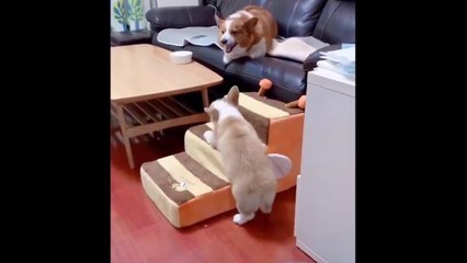 Cute Baby Dogs Doing Funny Things - Cute And Funny Puppies Videos - Puppies TV