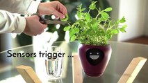 Lua, le smart pot qui affiche l'humeur de vos plantes !