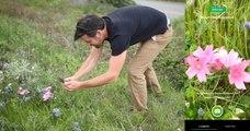 Il existe désormais un «Shazam» de la nature pour identifier les plantes et animaux à partir d'une photo