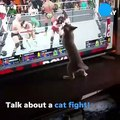 Cat attempts to fight wrestlers in video game on TV