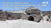Près du Jourdain, les chauves-souris ont remplacé les soldats israéliens