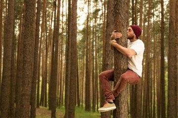 Was ist die Waldtherapie?