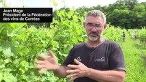 Vin de paille: la Corrèze veut se faire une place avec le Jura