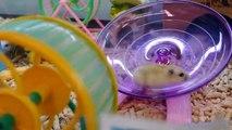 "Mice & Bunny Have Fun at Toys""R""Us - Korea"