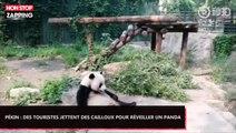 Pékin : Des touristes jettent des pierres sur un panda pour le réveiller (Vidéo)