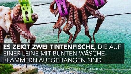 Kein Herz für Tiere: Mortiz Bleibtreu postet grausames Foto auf Instagram