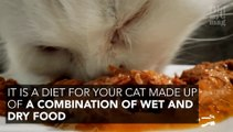 Introducing bi-nutrition into your cat's diet