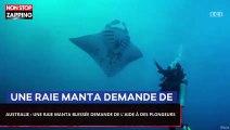 Australie : Une raie manta blessée demande de l'aide à un plongeur (Vidéo)
