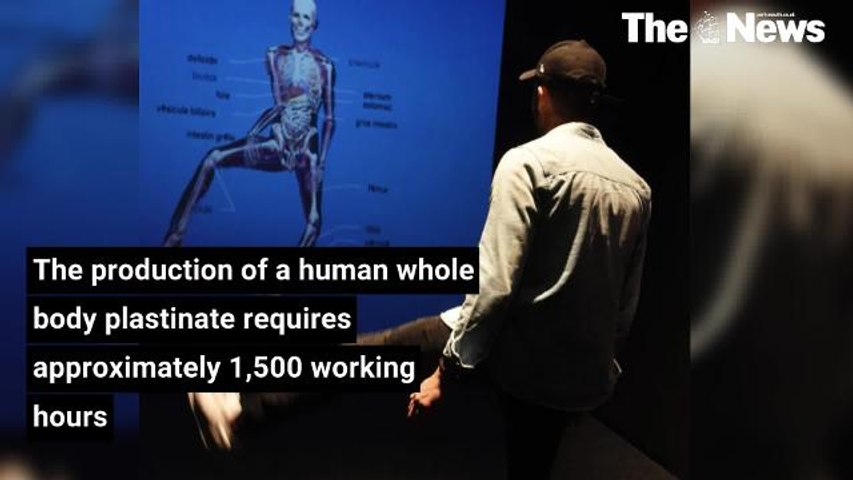 Dead Body Exhibition Facts