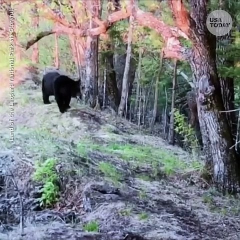 Bear gets too curious, bites and breaks camera.