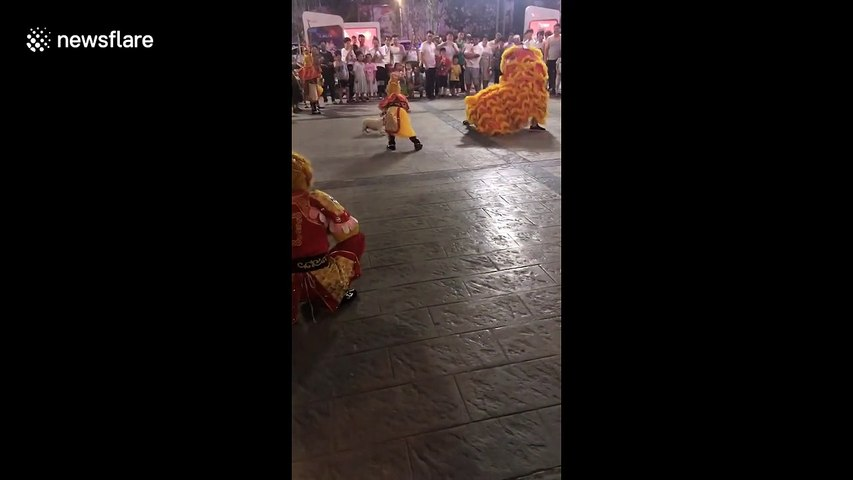 Fearless dog squares up to lion dancers during celebrations in Vietnam