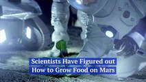 Scientists Figure Out Growing Food On Mars