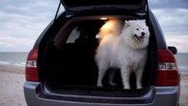Con Locauto si può portare il proprio cane su un'auto a noleggio
