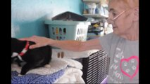 Woman with terminal cancer's urgent plea to rehome 40 cats