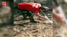 İtfaiye eri, kirpiyi yanmaktan böyle kurtardı