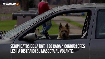 Cómo viajar seguros en coche con mascotas