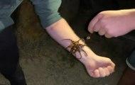 Un touriste prend une photo avec une pieuvre venimeuse sur son bras... et aurait pu mourir !