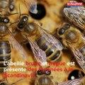 Menaces sur l'abeille noire en Ardèche et en Savoie