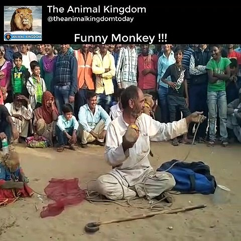 Naught Monkey