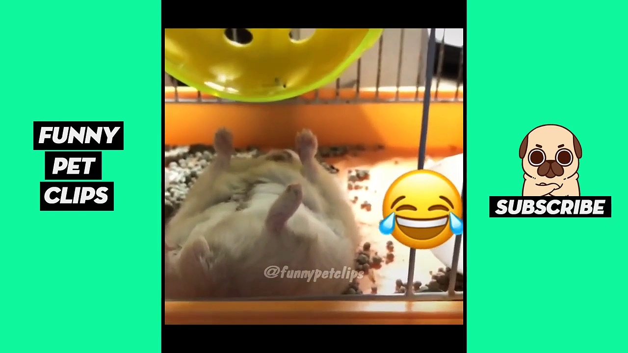 Funny Cute Animals: Tik Tok Pets #65