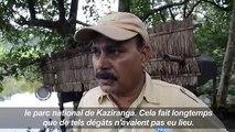 Inde: les animaux sauvages aussi touchés par les inondations