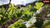 LES TUTOS VINS - Comment bien conserver une bouteille de vin entamée ?