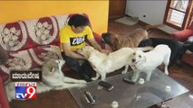 TV9 Maruvesha - Story Of Dog Breeder Who Became a Millionaire in Bengaluru| Cadaboms Kennels
