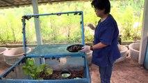 L'escargot, une calamité devenue poule aux oeufs d'or en Thaïlande