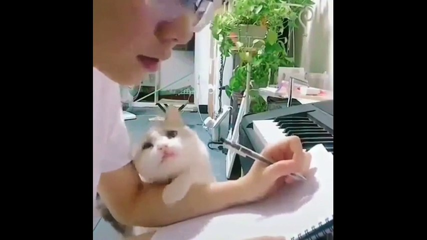 Funny cat video moments will make you smile#9