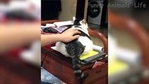 Chats et Chiens les plus cools et les plus drôles, La vie des animaux à mourrir de rire