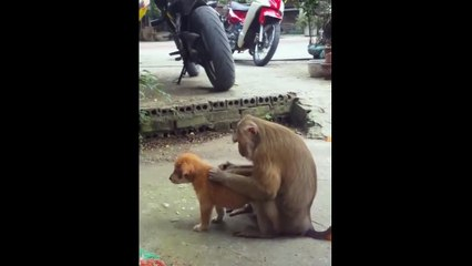 Funny Videos Of Puppies Playing - Cute Puppy Videos Doing Funny Things - Puppies Tv