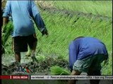 Hacienda Luisita farmers cry foul over referendum