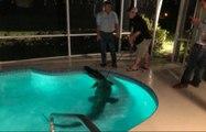 Ein riesiges Krokodil wurde in einem privaten Pool in Florida gefunden!