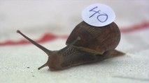 Snail Racing World Championships 2019