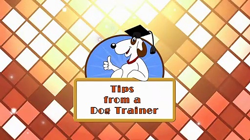 5 Rules of Shaping in Dog Training: Shaping Part 2