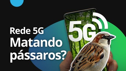 Rede 5G matando pássaros? [CT News]